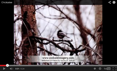 Chickadee Video Start Image by Artist Sandra K. Ziebold