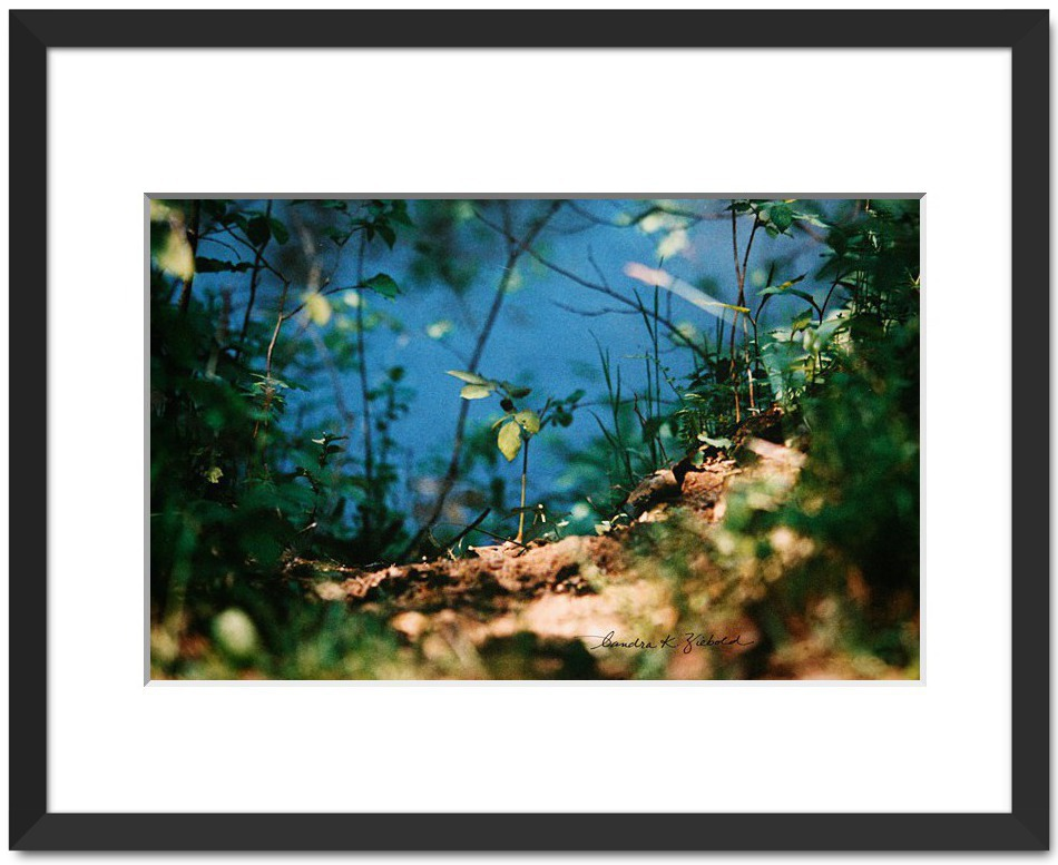 A Peek At The Creek. Fine Art. By Sandra Ziebold